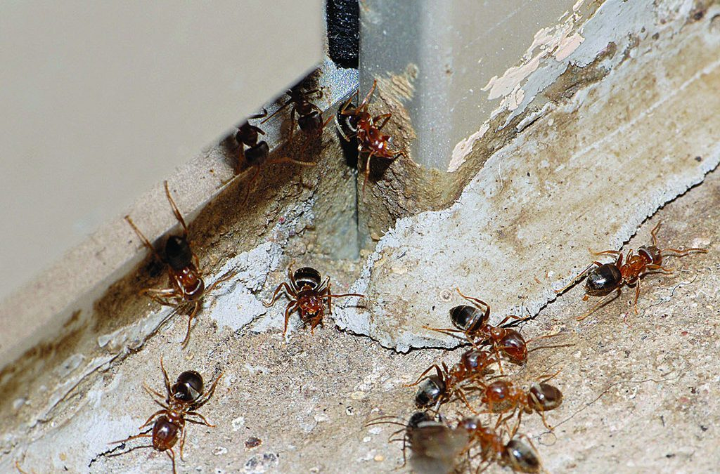 Pests That Are Good for the World (But Not Your House!)