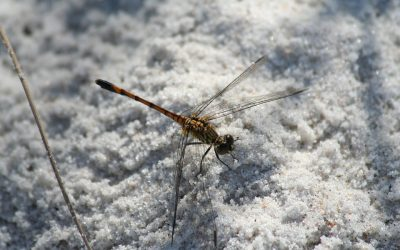 Winter Pest Prevention Tips