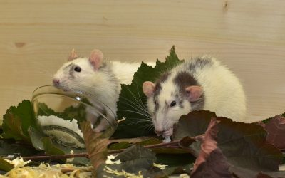 Pest Control Science Time: Ectoparasites and Pathogens Associated With Rats