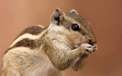 Top tips on getting a squirrel out of your attic