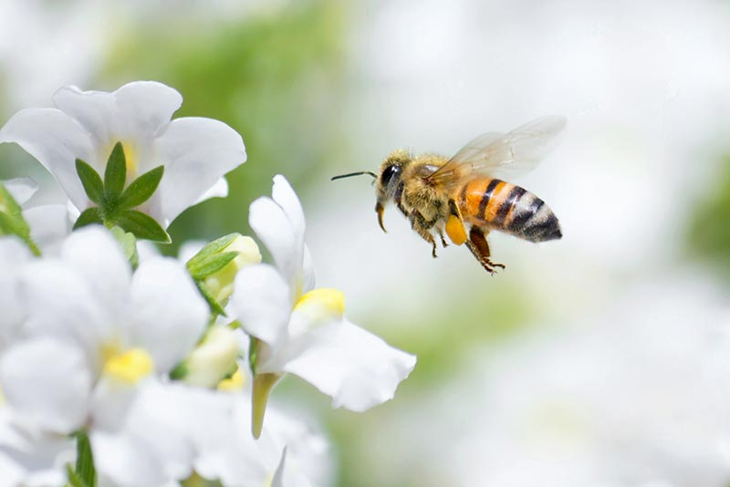 Bee Control in Lower Mainland BC