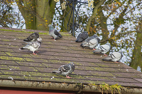 Bird Control and Removal Company